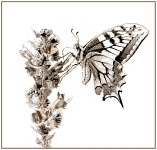 Insectes_1