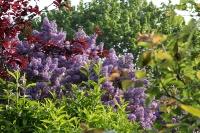 couleur du jardin_1