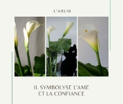 J.J. Waroux_1