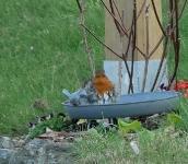 Oiseaux au jardin_1