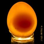 Oeuf translucide_1