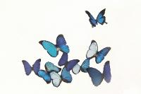 Papillonnage_2