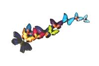 Papillonnage_3