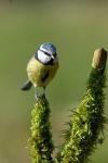 Oiseaux des jardins_3